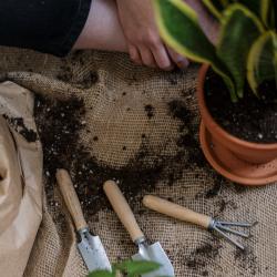 Jardinería y decoración